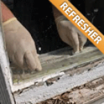 Lead Inspector Refresher - Seagull