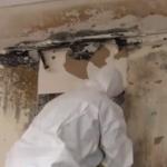 4-Hour Mold Remediation Supervisor Refresher - AMA