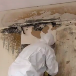 Mold Remediation Contractor - NY